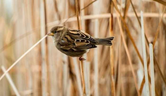 North America's Bird Population Has Plummeted
