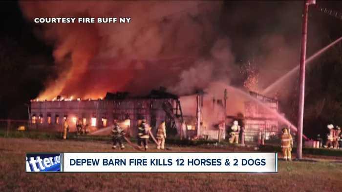 14 animals killed in Depew Barn fire
