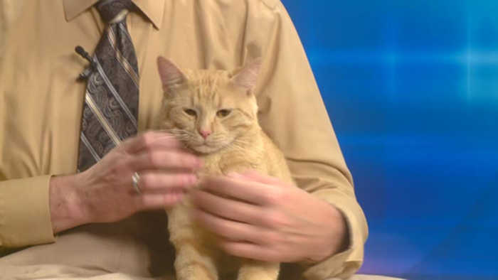 Pet of the week - Sprocket