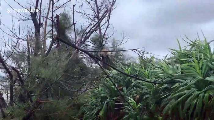 Cat clings to tree as Typhoon Tapah batters Japan