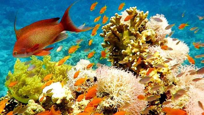 Jordan's scientists restoring coral reefs in Red Sea