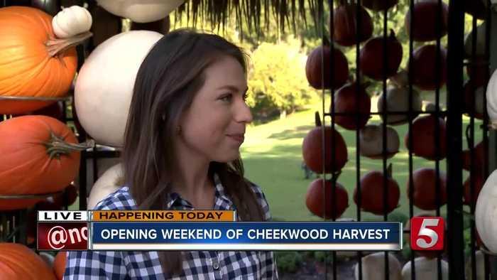 Cheekwood Harvest opens for fall season