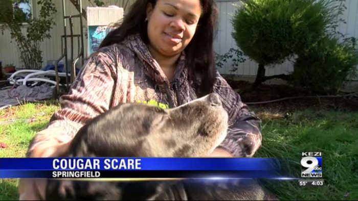 Cougar attacks dog in backyard, Springfield woman says
