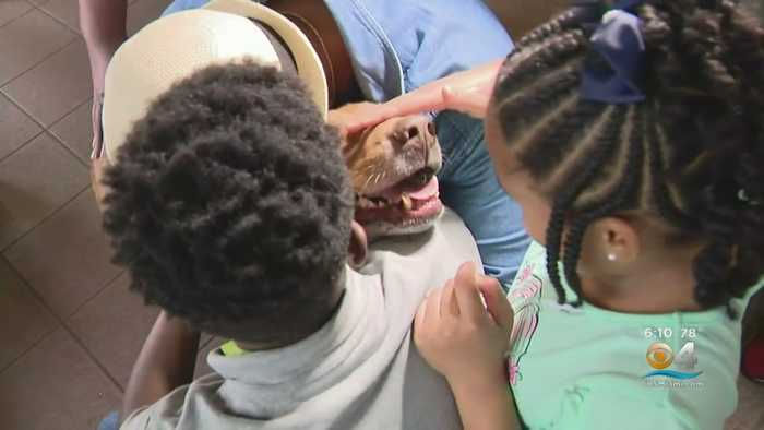 Dog Reunited With Bahamian Family