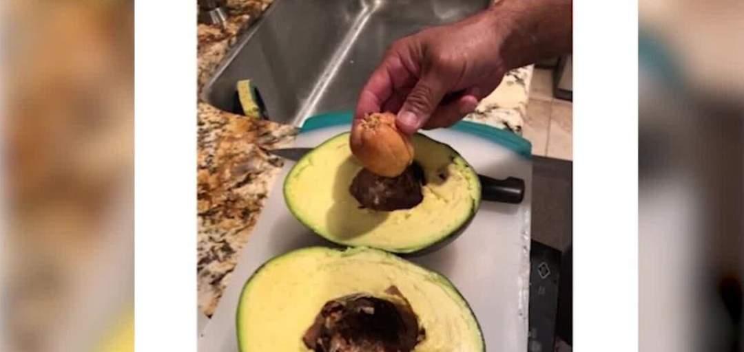Avocado sets world record