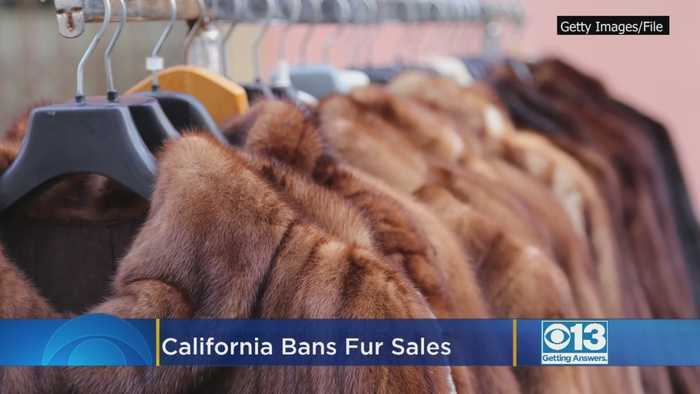 California Bans Fur Sales, Circus Animal Use