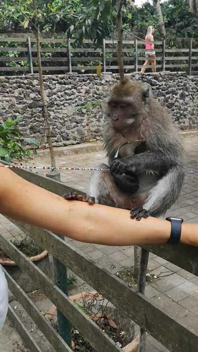 Monkey Snatches Sunglasses