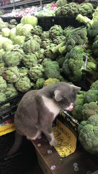 Cat Munches on Broccoli in Market Stall