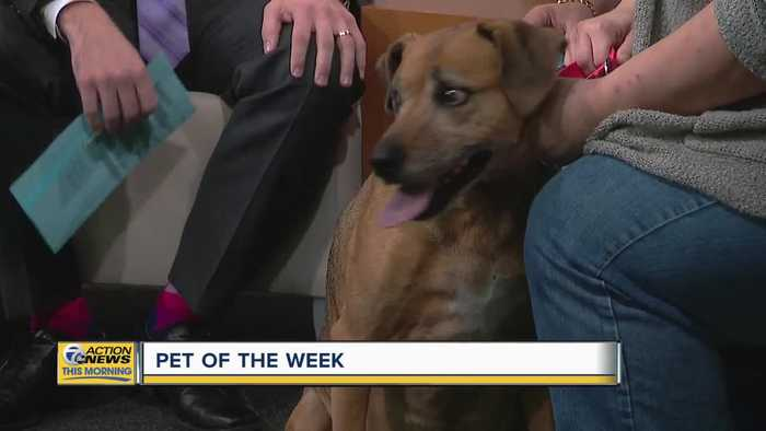 Pet of the Week - Jabba