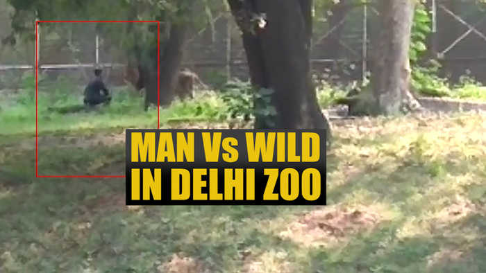Watch: Man enters lion's enclosure in Delhi zoo, rescued safely