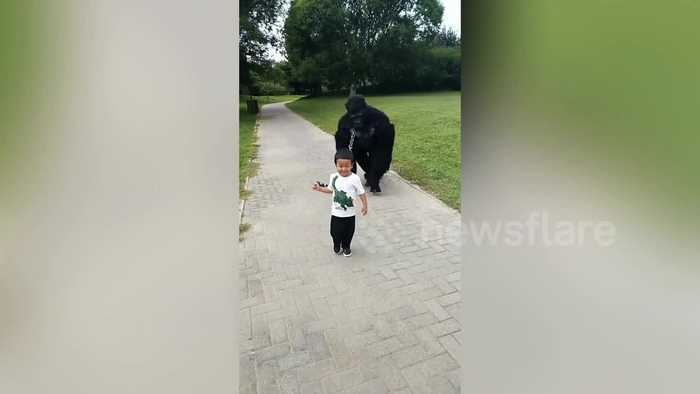 Chinese boy 'walks' father dressed up in gorilla costume