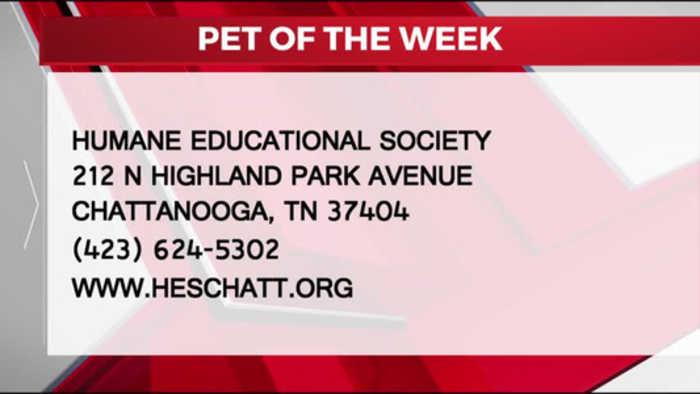 PET OF THE WEEK 10-18-19