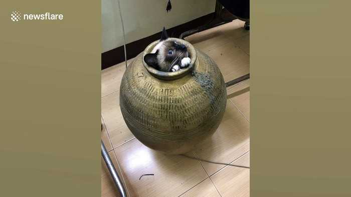 Thai woman smashes pot to free trapped cat