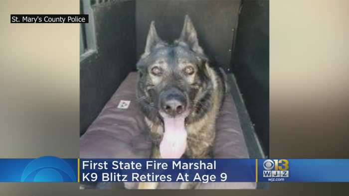 First State Fire Marshal K9 Blitz Retires At Age 9