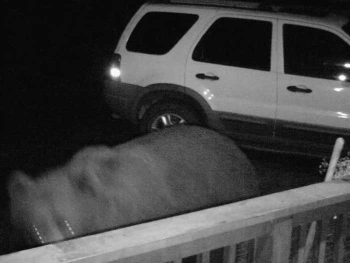Bear Opens Car Door Searching for Late Night Meal