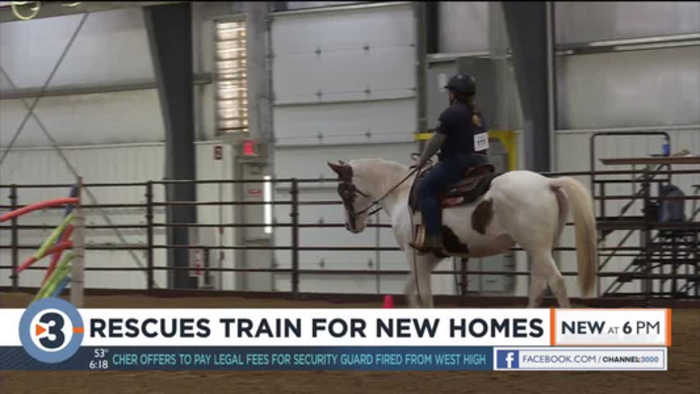 Rescue horses adopted at second annual Midwest Rescue Horse Trainers Challenge