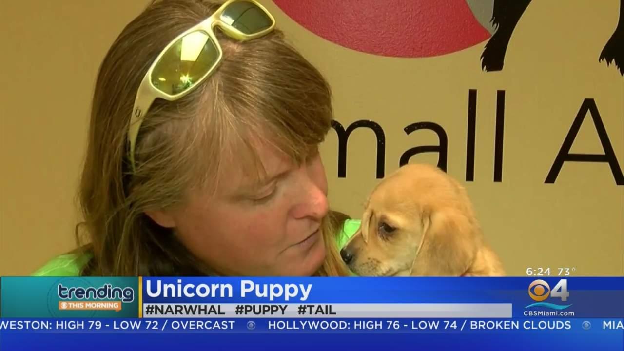 Trending: Unicorn Puppy