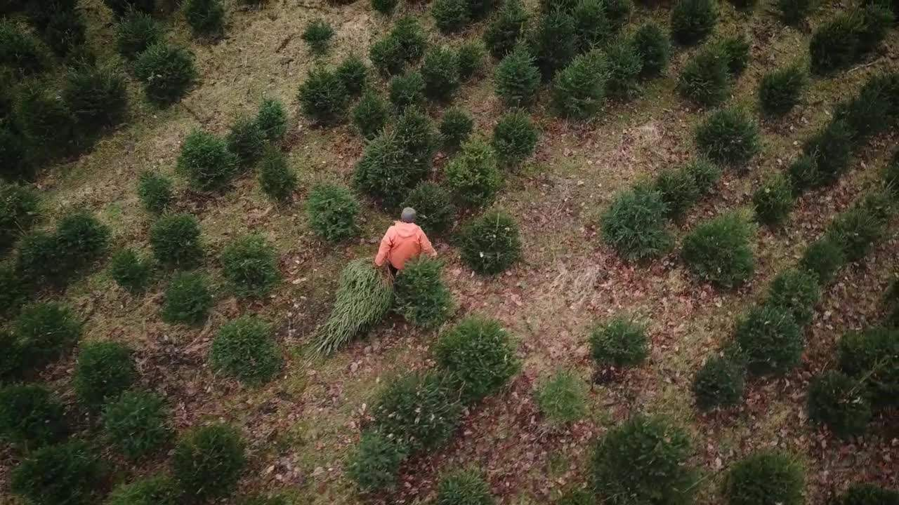 This spectacular birds eye footage shows 18,000 Christmas trees growing on a sprawling country estate this festive season