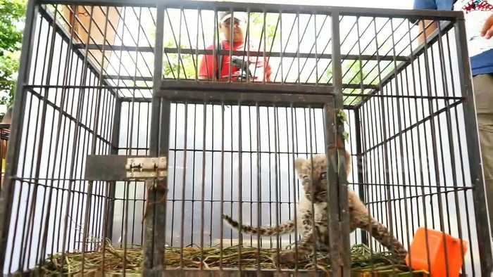 Indonesian police foil the smuggling of protected animals from abroad
