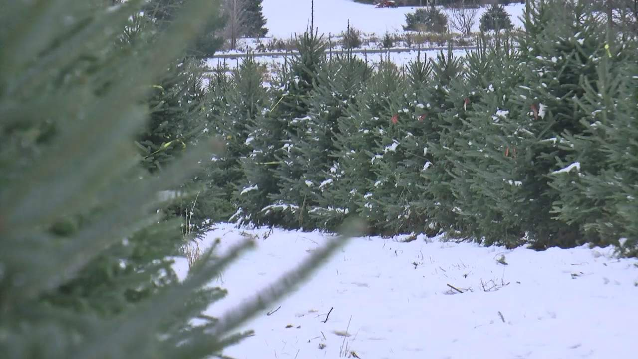 How to Dispose Of Christmas Trees And Wreaths - One News ...