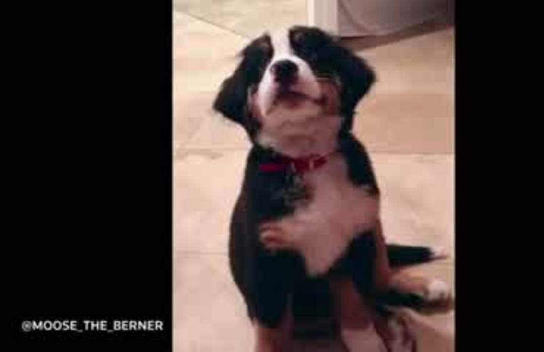 California pup's healthy diet goes viral