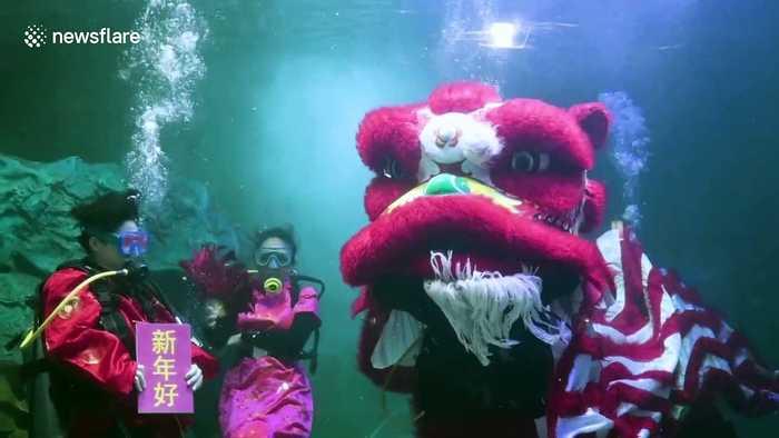 Zoo staff hold underwater aquarium show to mark Chinese New Year