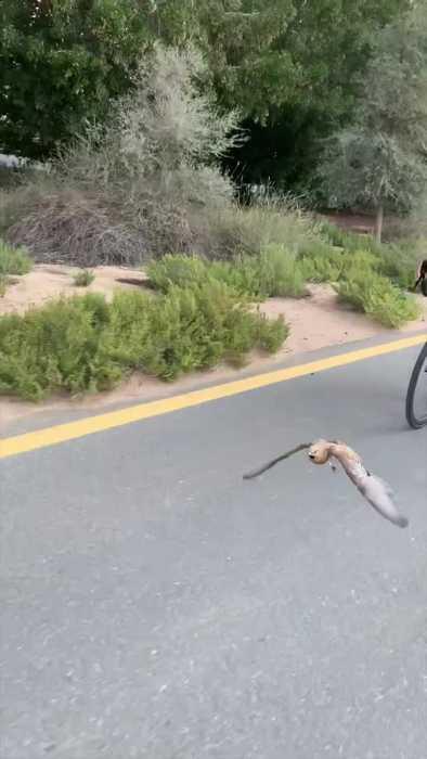 Bird Joins Group on Bike Ride