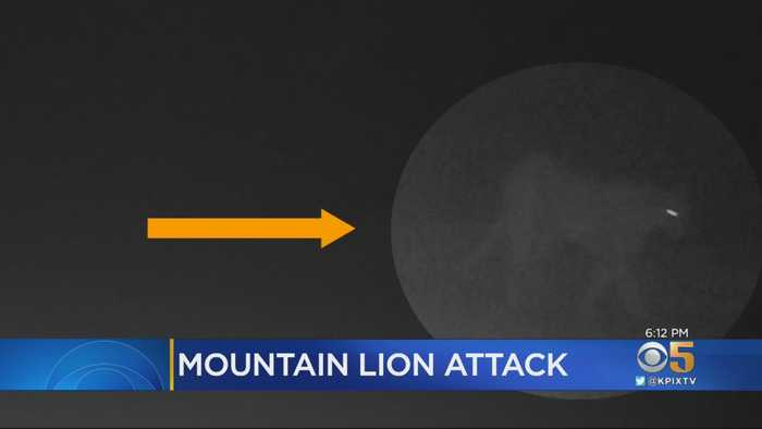 Santa Clara Co. Park Closed After Mountain Lion Attacks 6-Year-Old
