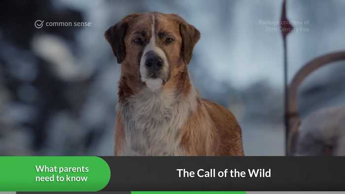 The Call of the Wild: Video Review
