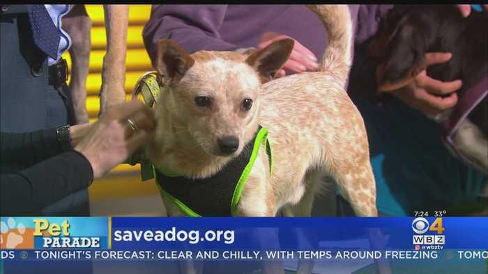 Pet Parade: Save-A-Dog Humane Society