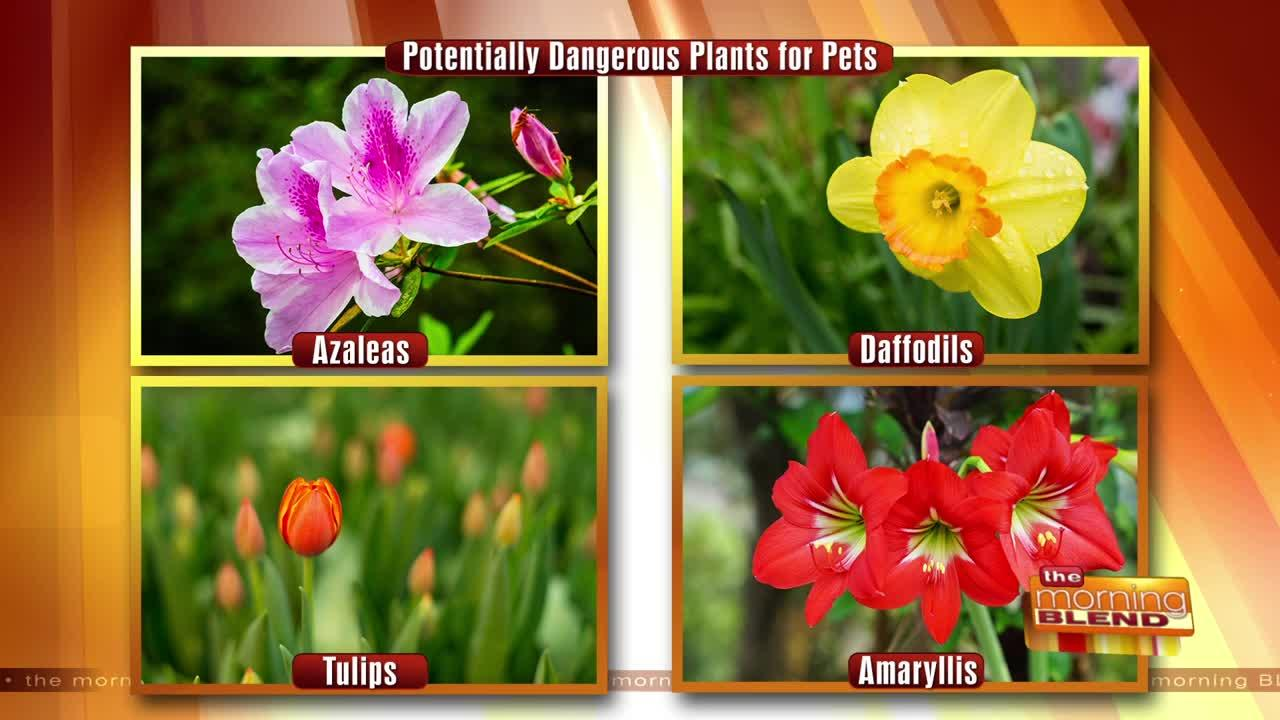 Gardening Safety Tips for Your Pet