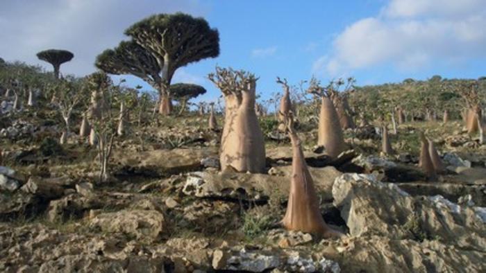Yemen: UAE-backed separatists take control of Socotra