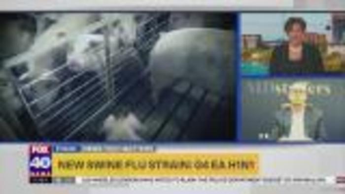 New swine flu strain: G4 EA H1N1