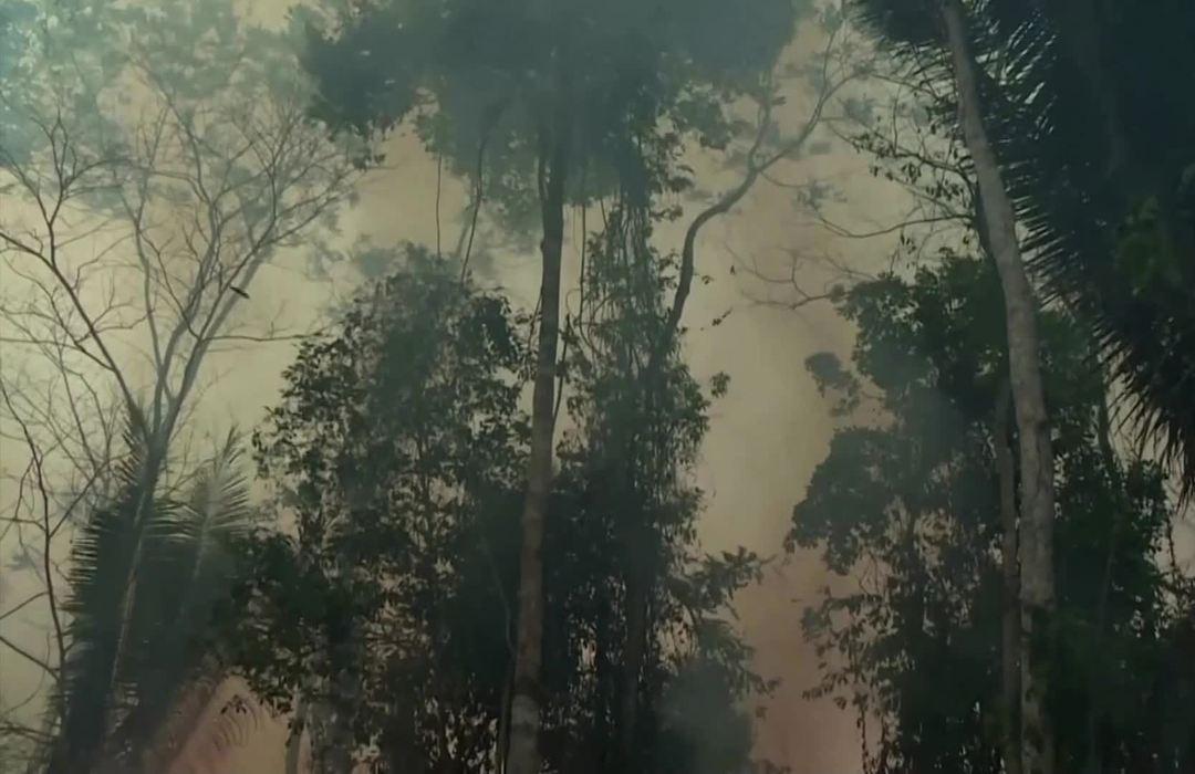 Brazil halts Amazon fires amid investor pressure