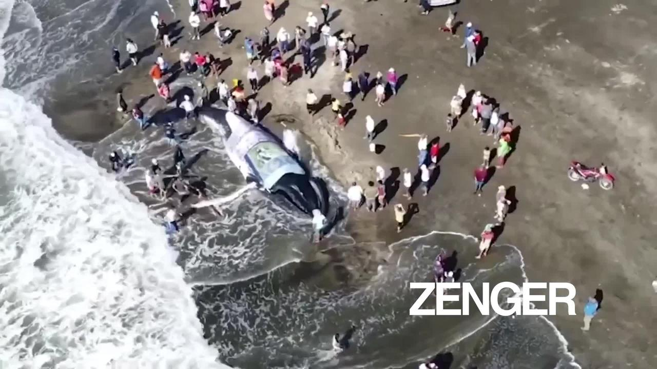 Ecuadorians rescue whale beached for 7 hours