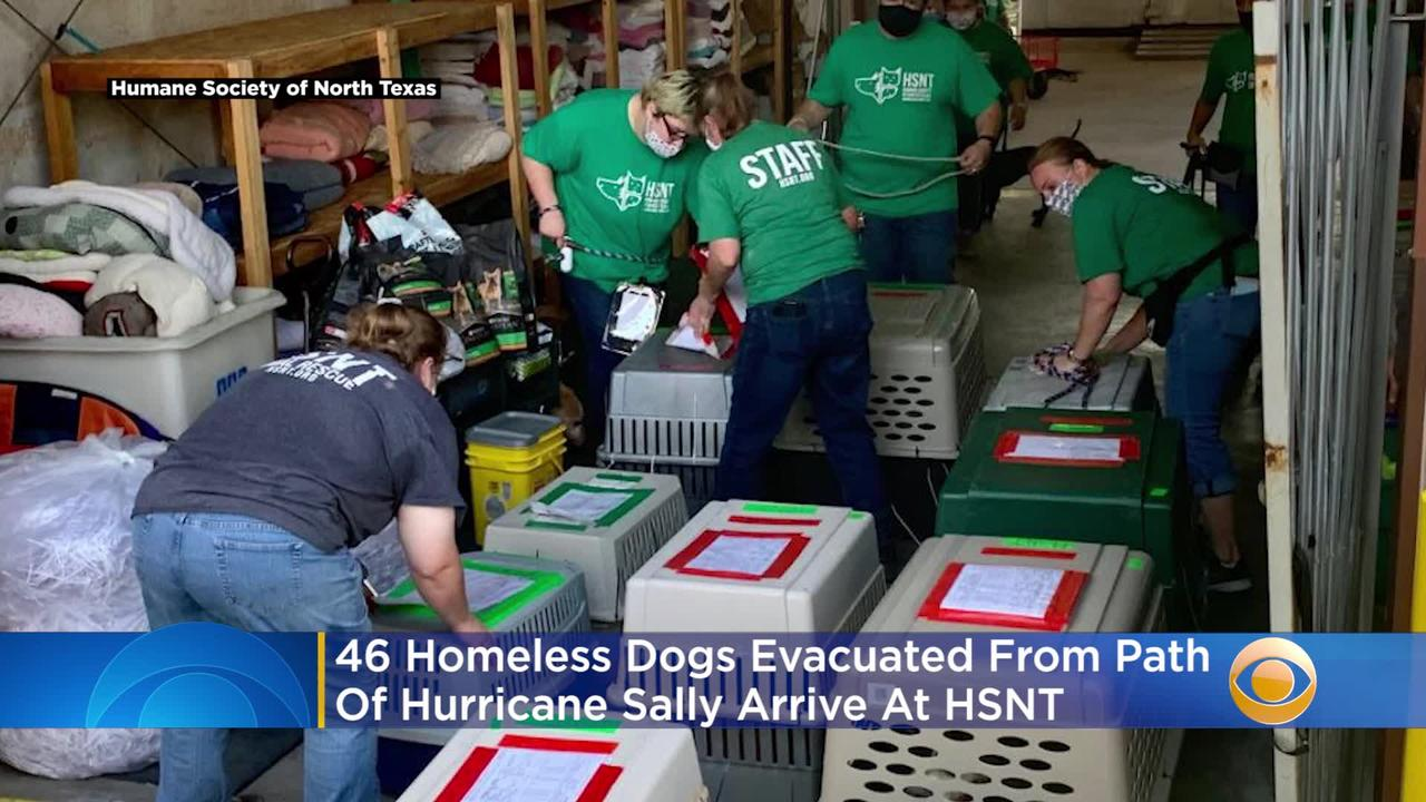 46 Homeless Dogs Evacuated From Path Of Hurricane Sally ...Hurricane Sally Path