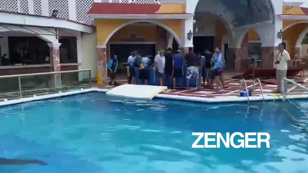 Dolphins sheltered from Hurricane Delta in hotel pool