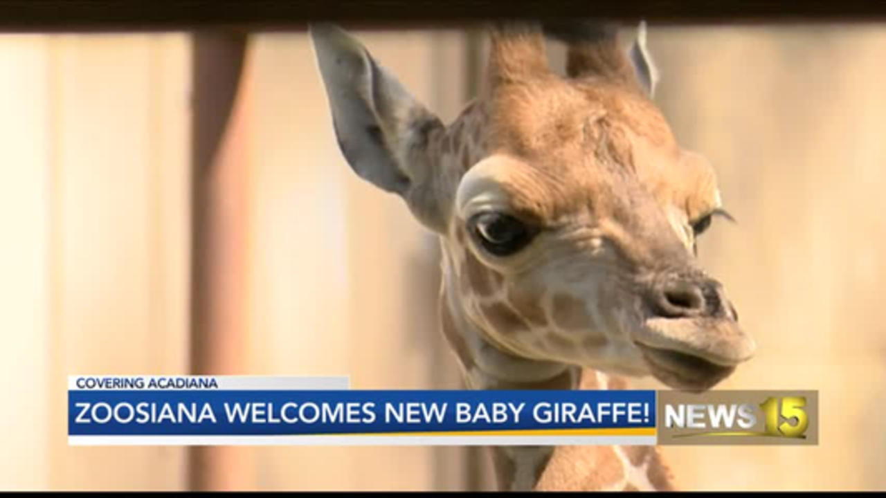 Zoosiana Names New Baby Giraffe Millie After Longtime Educator