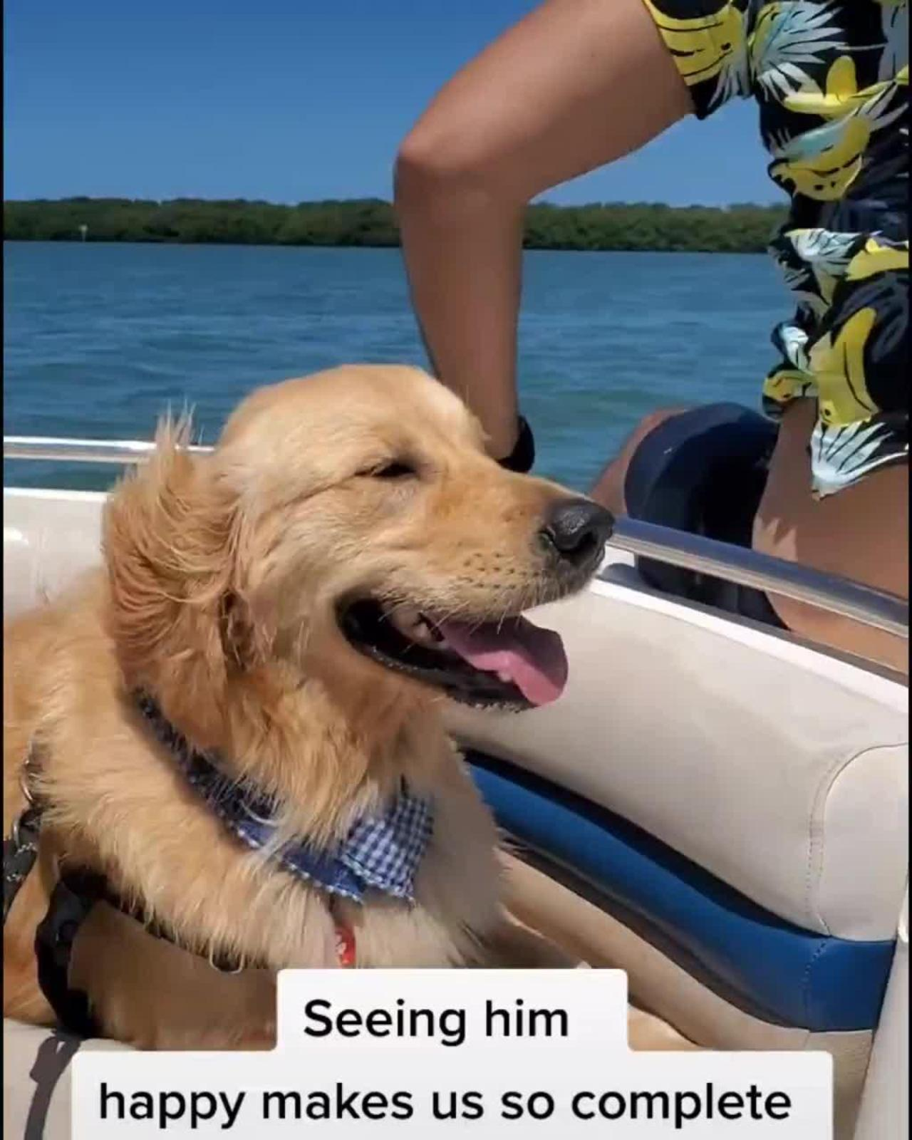 Dog Enjoys Boat Ride to the Beach and Plays Around Happily