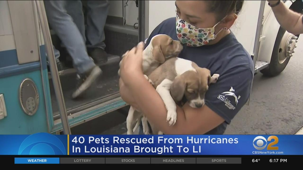40 Pets Rescued From Hurricanes In Louisiana Brought To Long Island