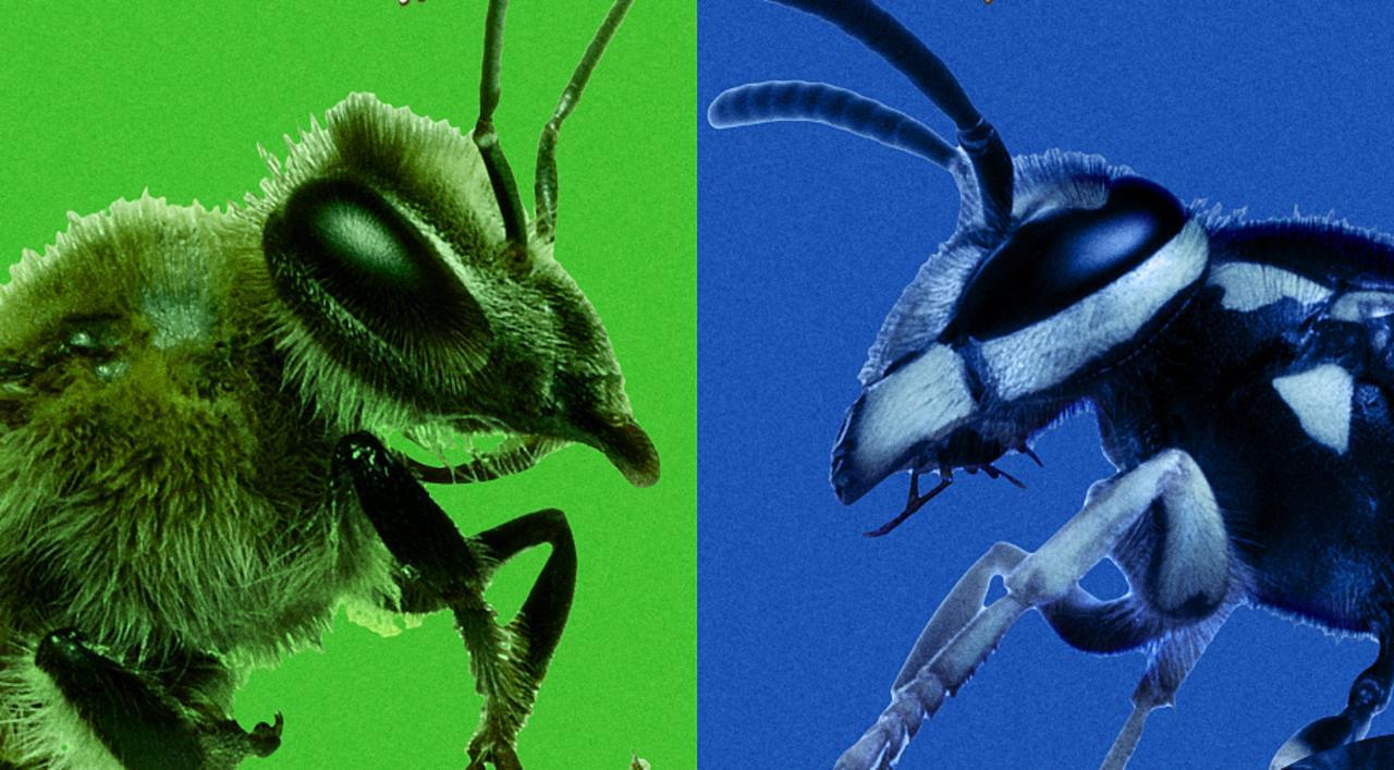 Murder Hornets Vs. Killer Bees Documentary movie