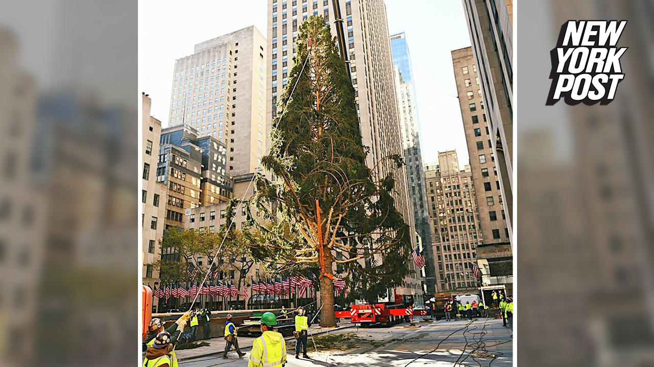 rockefeller center tree - photo #5
