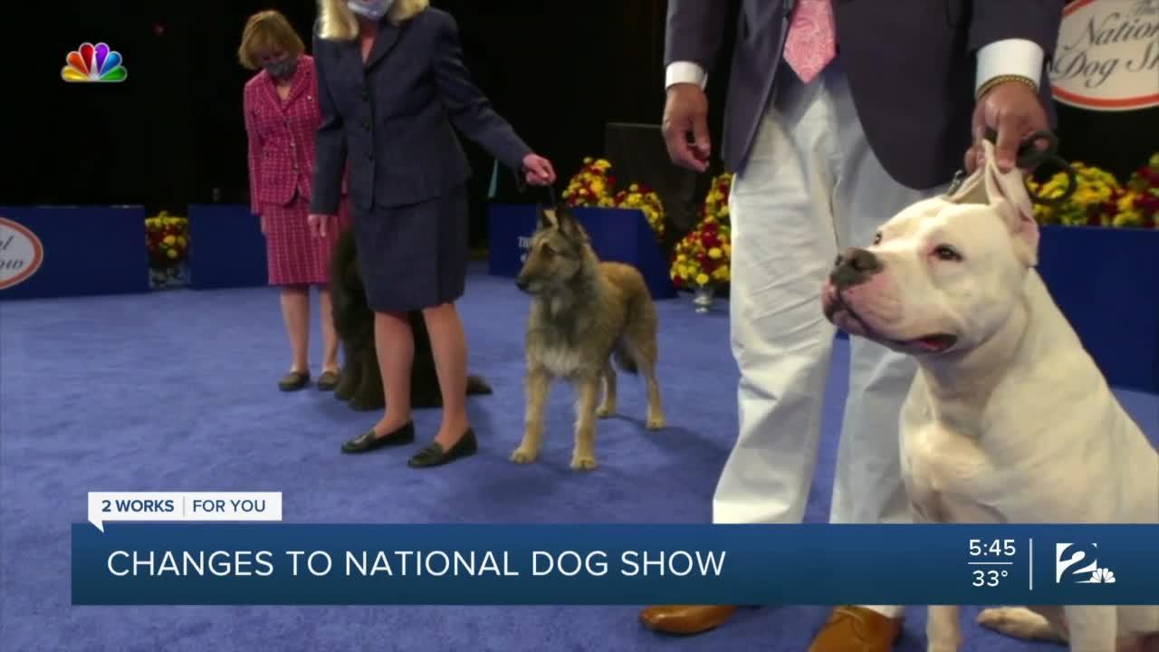 national dog show 2020 - photo #26