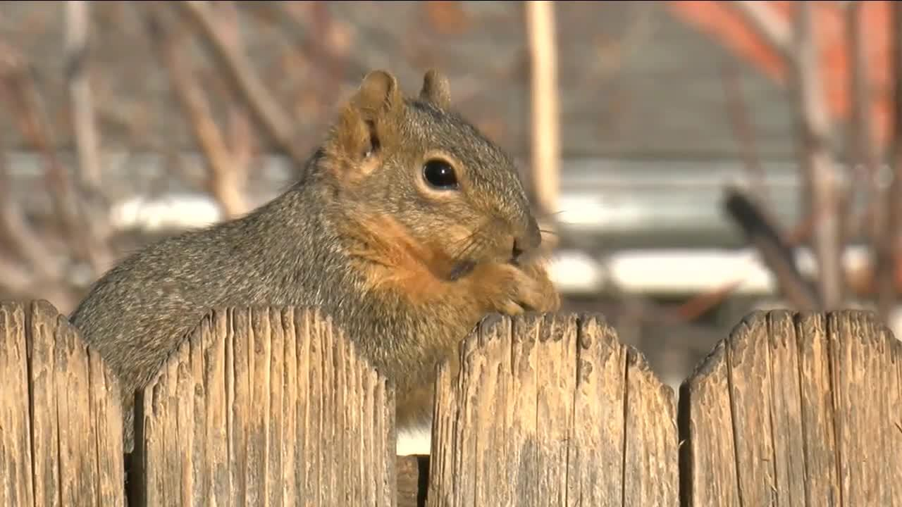 Woman believes neighbor's bird feeders are attracting unwanted wildlife to the area