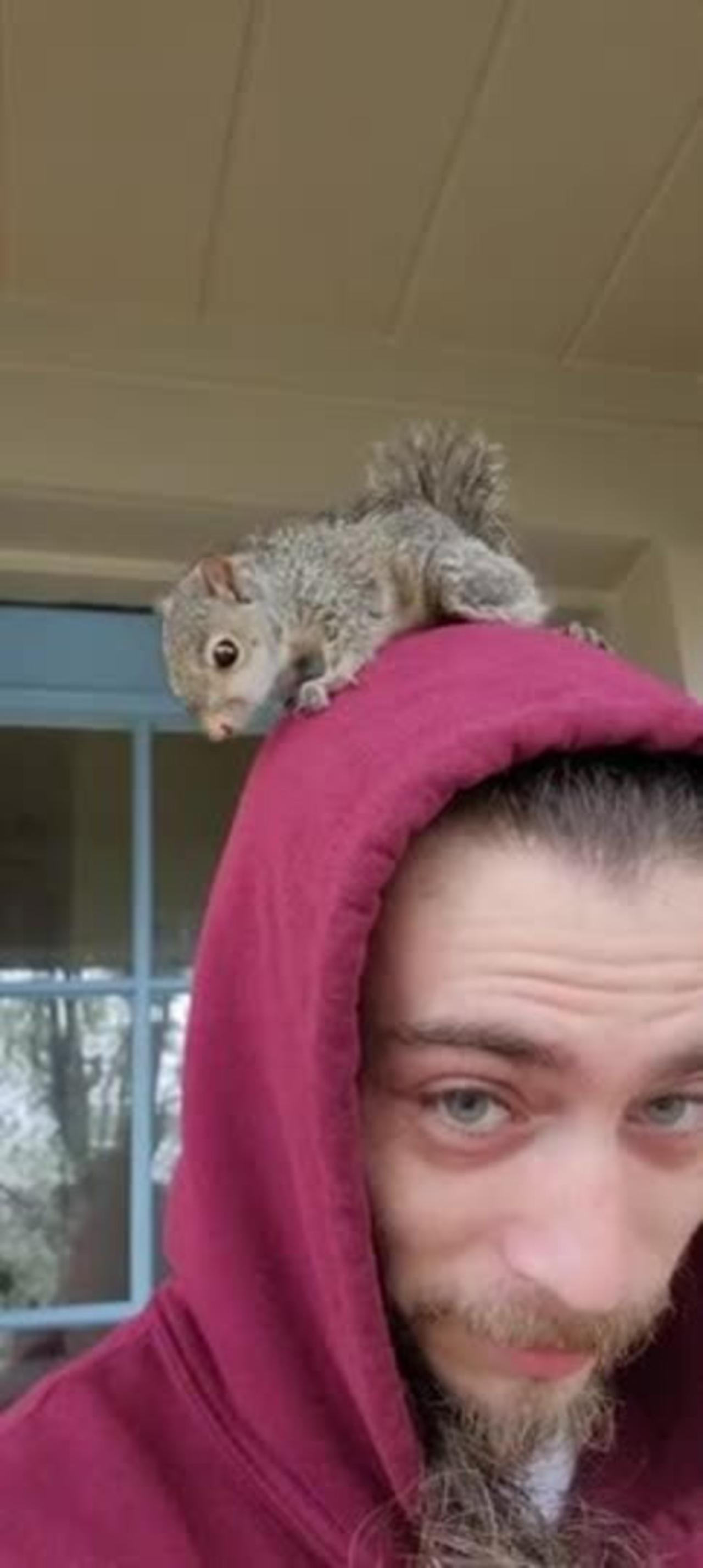 Squirrel Walks Up On Man's Body And Pets On His Head