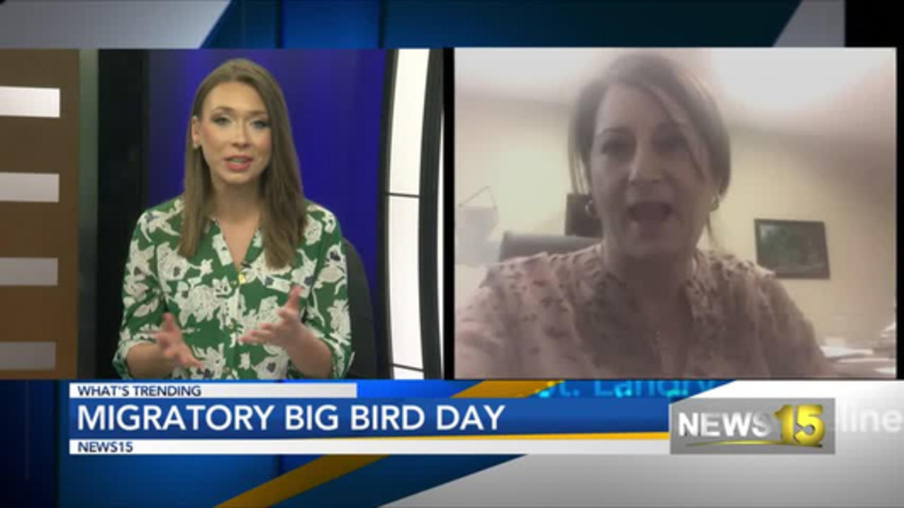 Migratory Big Bird Day