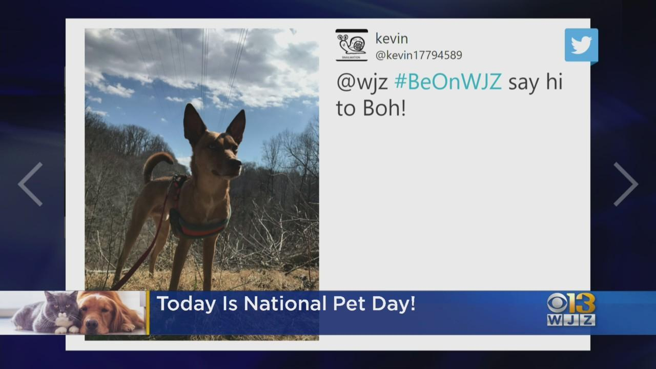 Sunday was National Pet Day