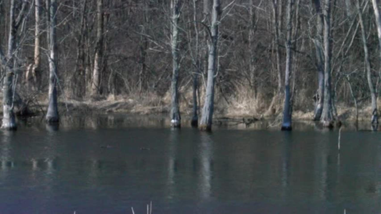 Wetlands bill passes the Senate, now head to the Governor's desk