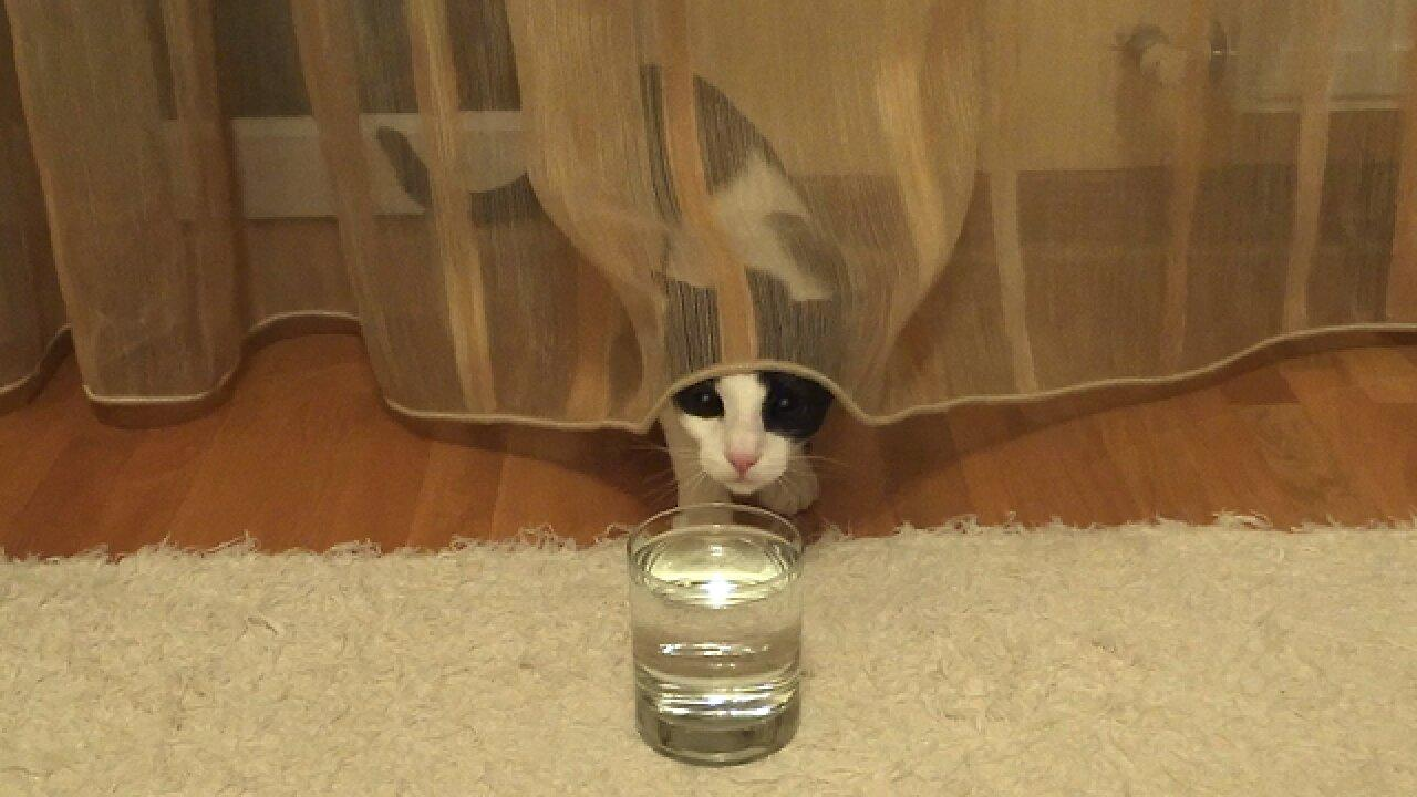 Confused cat has mind blown by sparkling water