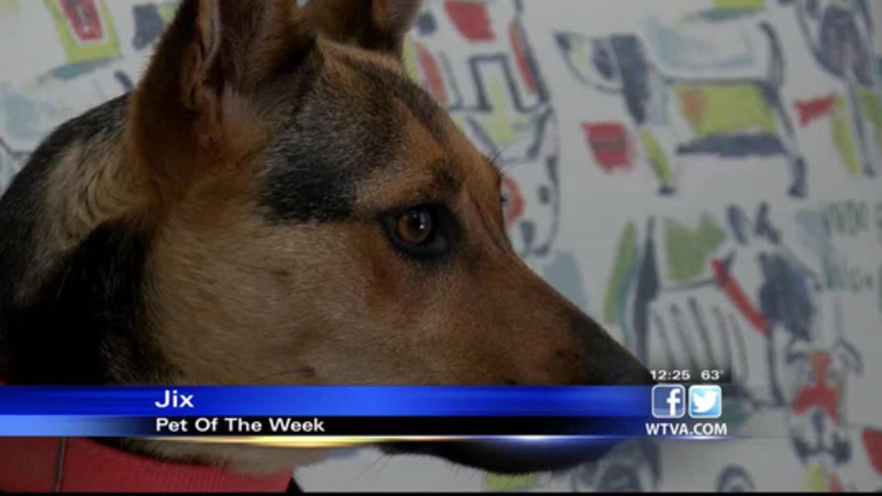 Pet of the Week - Jix